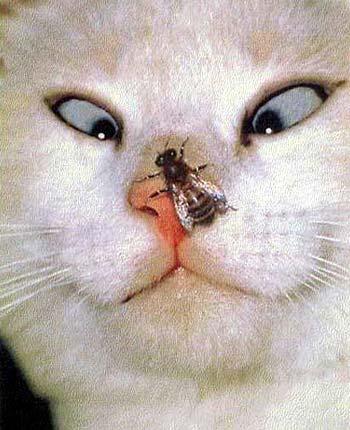 http://www.prikol.net/pic/animal/animal012.jpg
